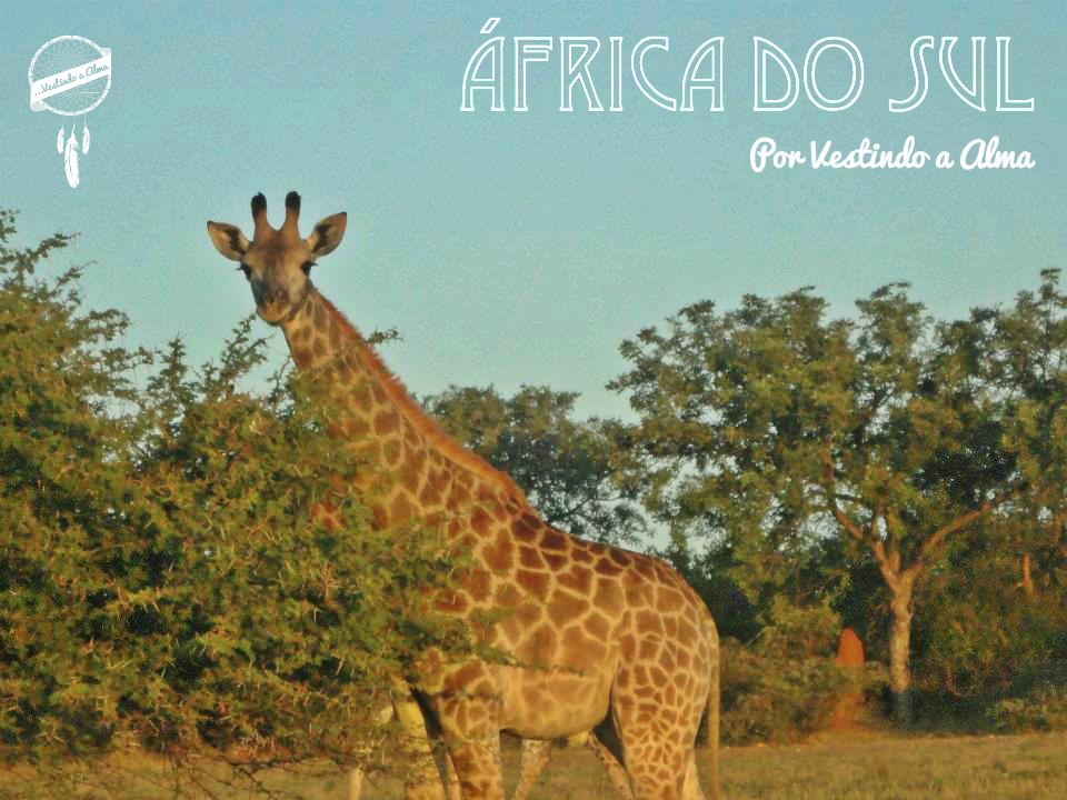 safari na africa do sul, safari, africa do sul, parque nacional kruger, o que fazer na africa do sul, africa do sul o que fazer