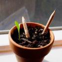 sprout lapis sustentavel